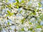 春天已至,未来可期 ——停课不停学,川语康在行动